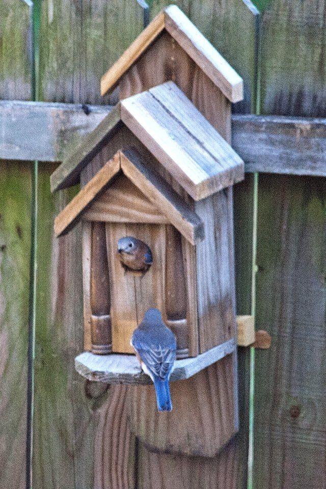 25 Best Ideas About Bluebird Houses On Pinterest Blue