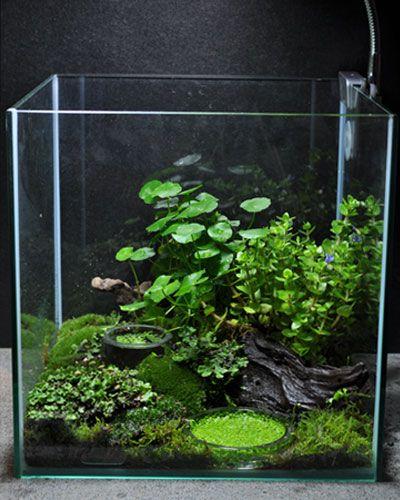 Greenfingers Plant Arrangement