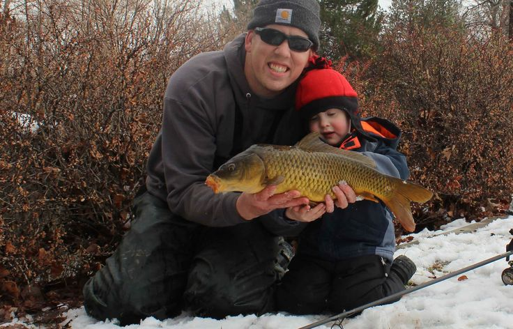 29 best images about common carp on pinterest virginia for Best fishing in utah