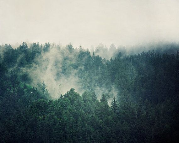 Landscape Photography, Evergreen Trees in Fog, Teal Wall Art, Spring Photograph, Forest, Rain, Mist, Mysterious, Blue Green - Savage Beauty