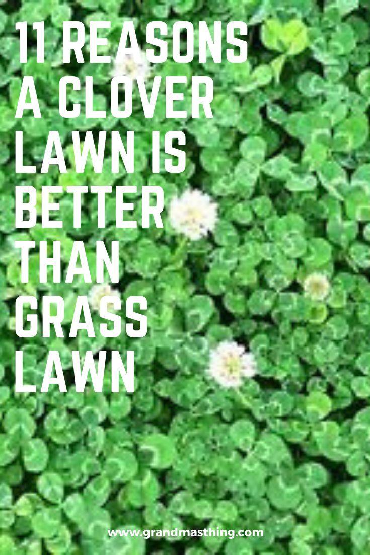 2d2ab446bbd8350179dd161b345daa7b - How To Get Rid Of Clover Patches In Lawn