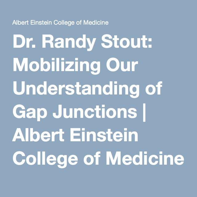 Dr. Randy Stout: Mobilizing Our Understanding of Gap Junctions | Albert Einstein College of Medicine