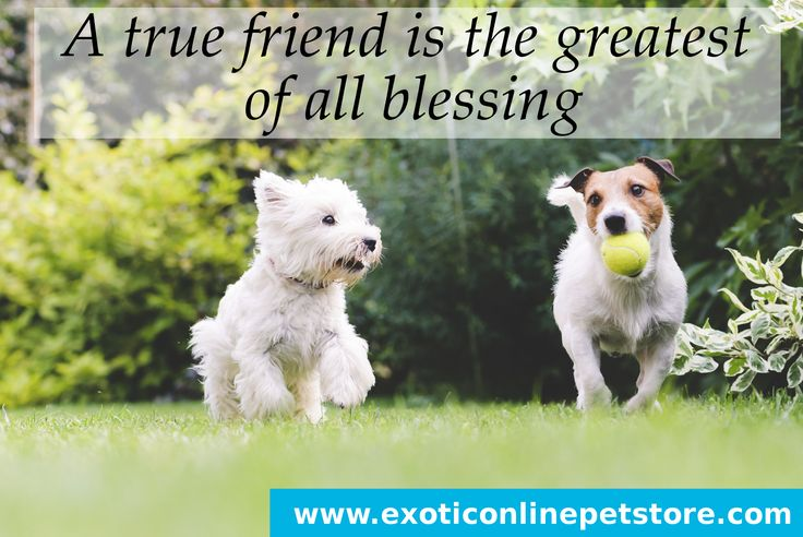 """A true friend is the greatest of all blessing."" #truefriend #greatest #blessings #dogs http://www.exoticonlinepetstore.com/"