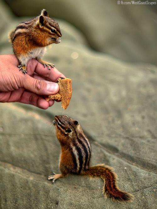 Chipmunks   hier is goed te zien hoe klein ze zijn