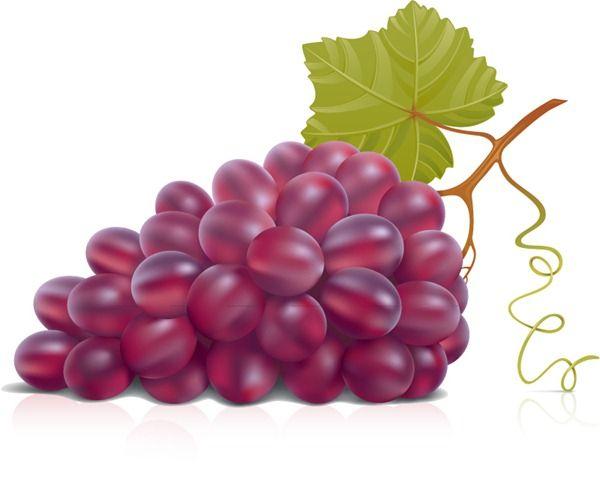 Purple grapes vector graphics