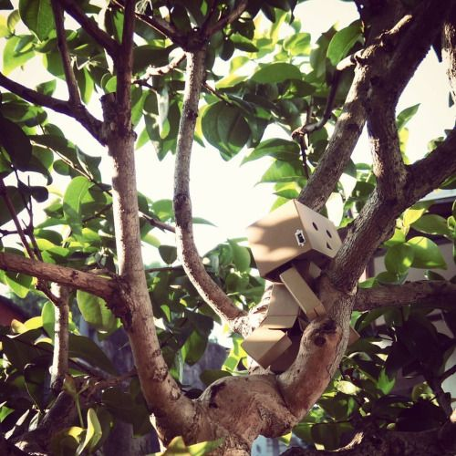 """When you fall down you gotta get back up no matter how bad it hurts."" . ""The best view comes after the hardest climb.""   #quote #danbo #danboard #yotsuba #toys #toygraphy #climb"