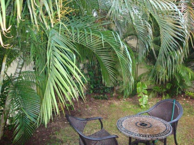 Everyone needs a little place to sit or dig in nature.. Casa Patricia on Cozumel island  has a perfect back yard for just enough digging to fill your gardening desires..flowers and palms and plants flourish here..