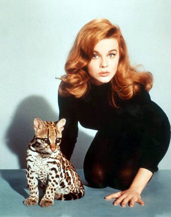 Ann Margaret poses with a baby leopard, (1960's)