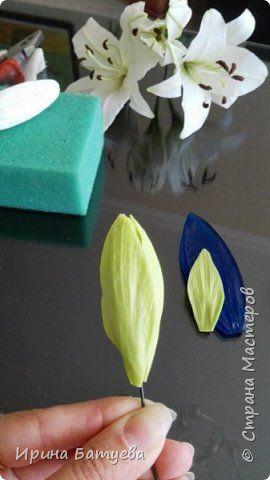 Это продолжение мастер-класса по белой лилии. В первой части мы сделали цветок лилии: http://stranamasterov.ru/node/1055126 . Здесь мы будем учиться делать листики, бутоны, а также собирать все это в ветку. фото 18
