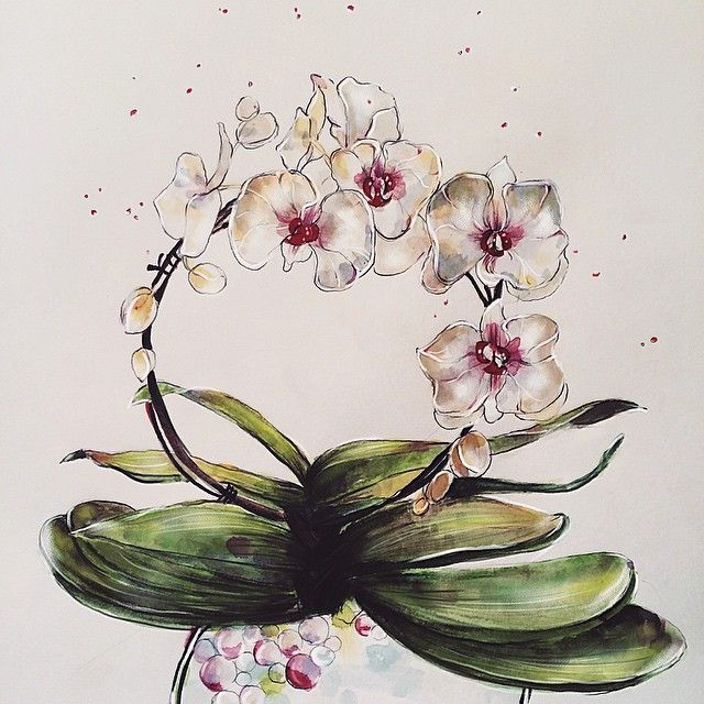 White Phalaenopsis orchid illustration. #watercolor #floralillustration #botanicalillustration
