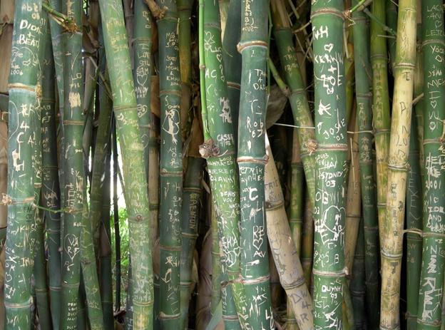 Bamboo engravings at Adelaide Botanic Gardens