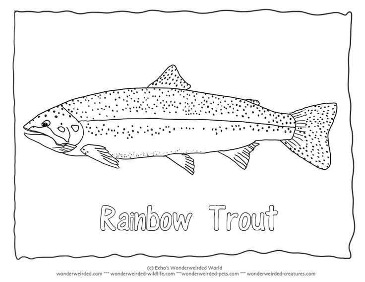 Rainbow trout coloring page rainbow trout pictures for fish coloring pages