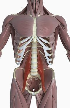 Learn About Psoas Muscle Pain & Psoas Release Techniques. A great read for anyone who suffers from, or knows anyone suffering from low back pain.
