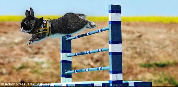 Bunny hurdles
