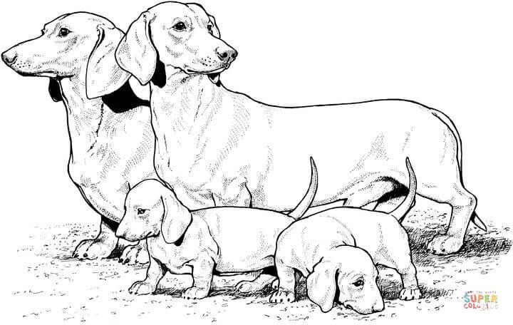 Dachshund With Puppies Coloring Page Free Printable Coloring