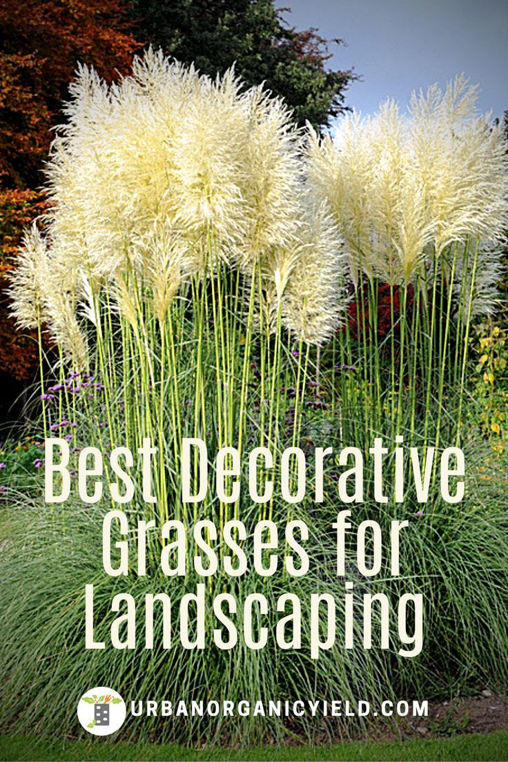 Decorative Grasses For Landscaping Ornamental Grasses For Shade Ornamental Grass Landscape Shade Grass