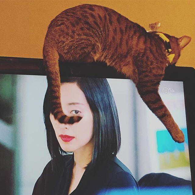 . そこが あったかいのは わかるけど…😅 シッポが…ね…(*´_ゝ`) なんか…申し訳ない🙈 . . #猫#ねこ#ネコ#ネコ部#ねこ部#ニャンコ#にゃんこ#にゃんすたぐらむ#ニャンバサダー#ニャンスタグラム#キジ猫#きじとら#キジトラ連合#愛猫#猫好き#家族#もふもふ#cat#family#catstagram_japan #テレビに登る#テレビ猫#しっぽ#しっぽが邪魔#邪魔する#見えない