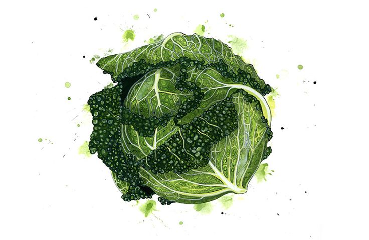(via Emma Dibben - Illustrator - Portfolio - Food Illustration)