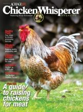 Spring Edition The latest issue of Chicken Whisperer Magazineis out, ready to help you get the most from your flock this season. Inside, look for articles on: Preparing eggs for Easter decorating, and new ways to express yourself artistically What to look for and evaluate when buying chicks Novel protein sources for chicken feed How to keep your family safe when working around your flock What you and your chickens need to know about Salmonella Helpful tips from Fort Christmas farm on…