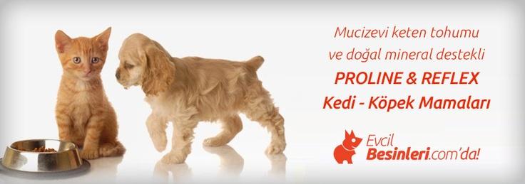 Proline & Reflex Ürünleri Evcilbesinleri.com'da