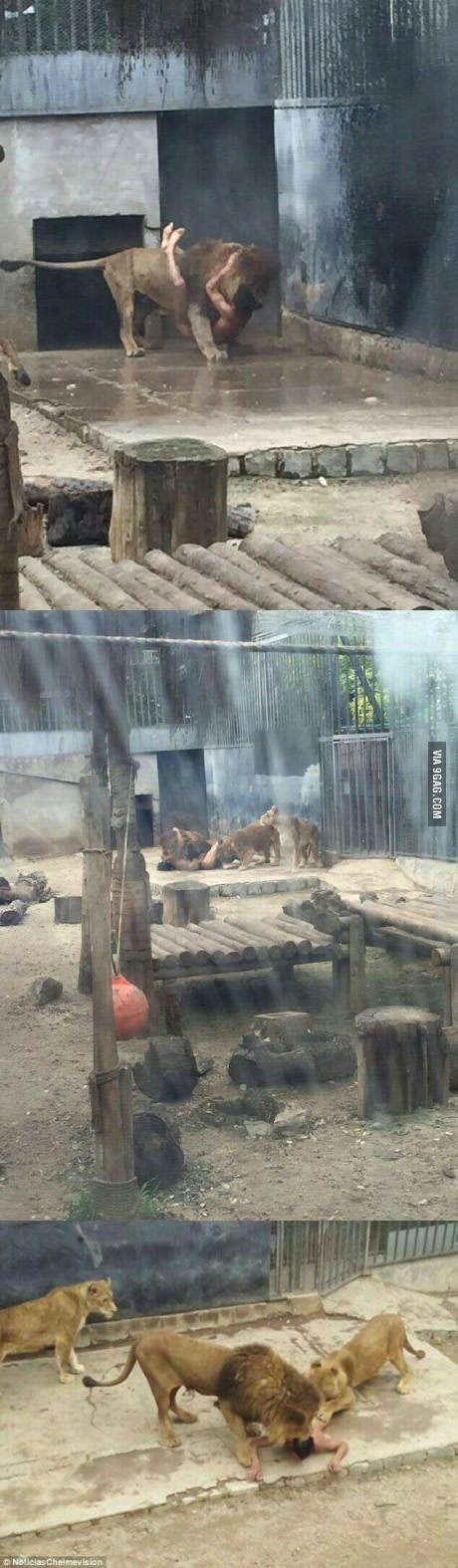 Guy tried killing himself by breaking into the lions cage at the local zoo. He didn't die and zoo had to kill 2 lions for attacking him :(