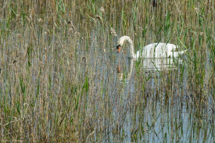 Fauna Parco Delta del Po