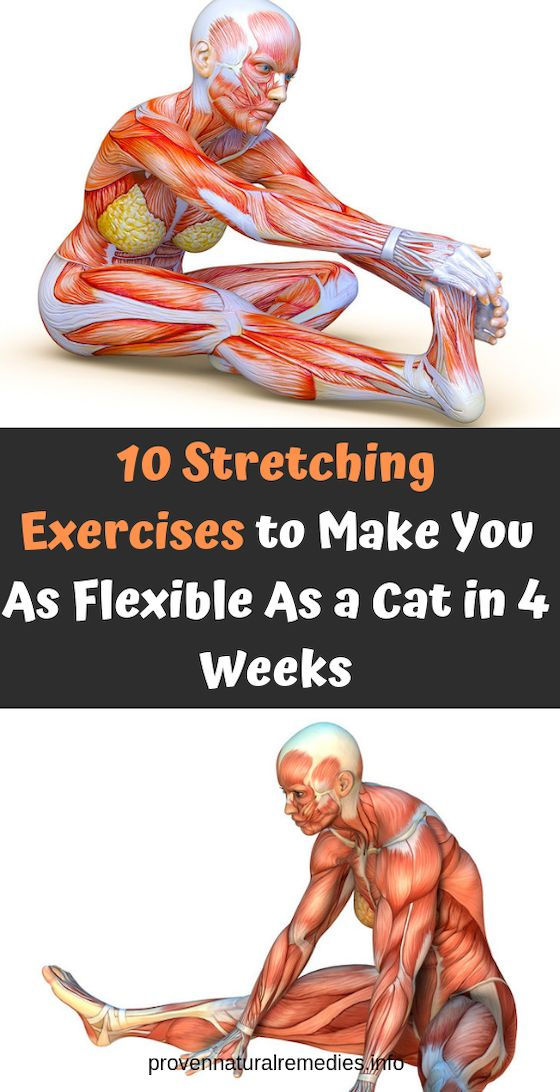 10 Stretching Exercises to Make You As Flexible As a Cat in 4 Weeks ! – Ideas … – yoga