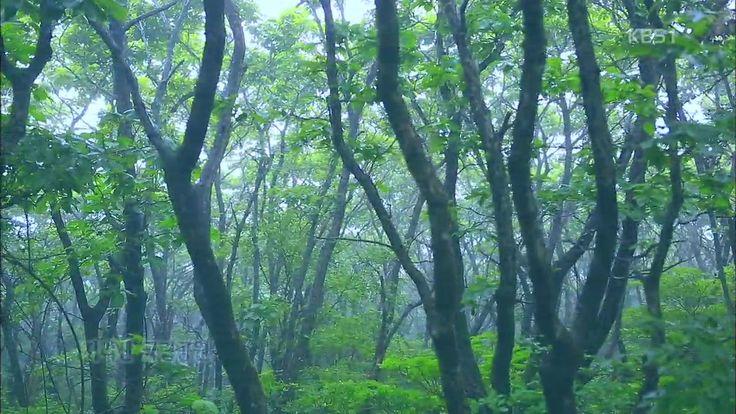2014.07.21 [뉴스광장 영상] 지리산 국립공원 / 김정은