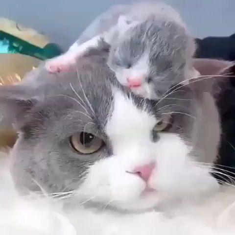 """Pleasant Cats 🇹🇷 auf Instagram: """"📹 von Unknown 😍😍 #pleasantcats …   – CATS"""