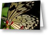 Butterfly World Greeting Card by Renette Louw