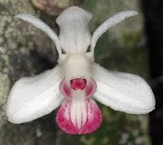 Image result for orchids images pictures