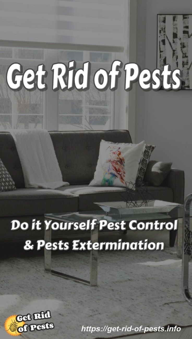Get Rid of Pests- Information about Do it Yourself Pest Control and Pests Extermination, how to prevent bed bugs & how to get rid of bed bugs,best bed bug treatment & safety removal; home remedy to cure bed bug bites #bedbugs, #bedbugremedies via @https://www.pinterest.com/GetRidOfPests
