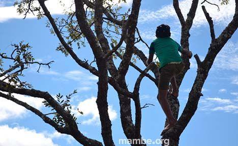 Recolección de materia prima para el trabajo artesanal.  ( Vichada - Colombia) Conoce más de nuestro trabajo en Mambe.org!