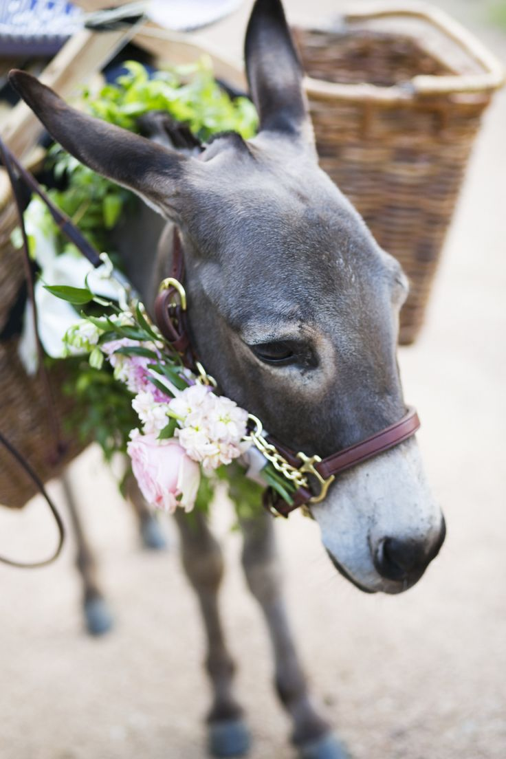 Drink / Beer Donkey's for your Wedding at Pecan Springs Ranch!