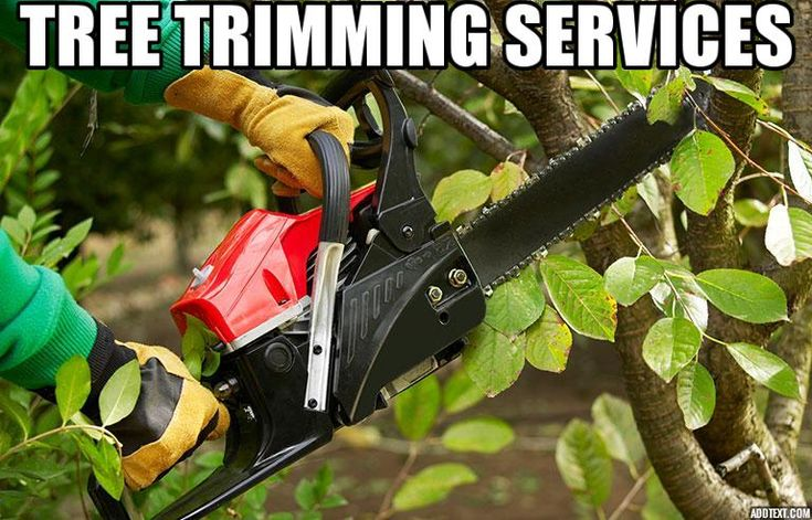 25 Gorgeous Tree Trimming Service Ideas On Pinterest