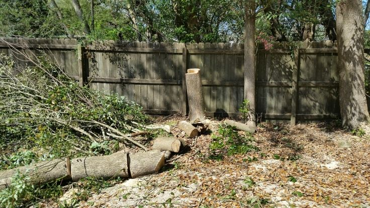 Pin by Best Tree And Sprinkler Service on Tree Service