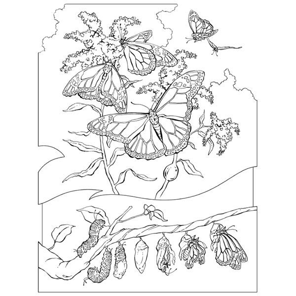 Realistic Animals Coloring Pages Free