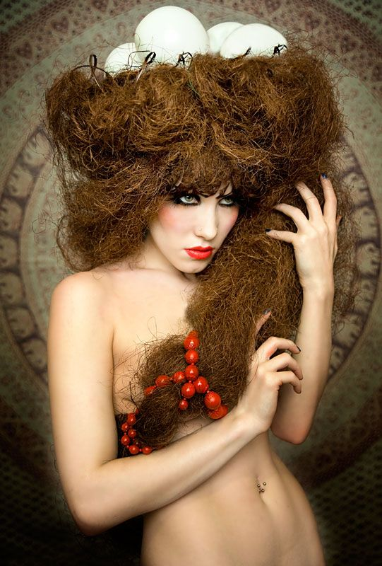birds nest hair style 1000 images about bird cage on nests birds 6905