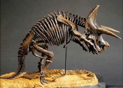 Triceratops Prorsus Dinosaur Skeleton Unpainted Statue Figure