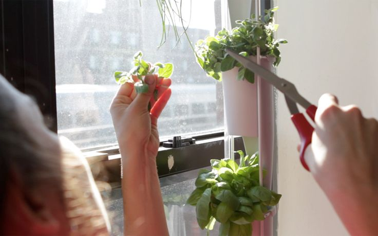Windowfarms | A vertical, indoor garden for growing food in your windows