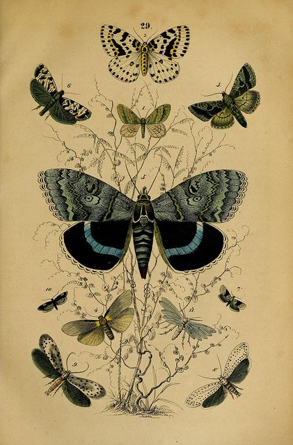 Scientific Illustration - Plate 29, Manual of the Natural History of the Three Kingdoms, 1850