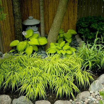 Japanese gardens rely on subtle color contrast and bold textural differences to create interest. Here chartreuse and green hostas surround the base of a tree while variegated hakone grass softens the edge of the bed.