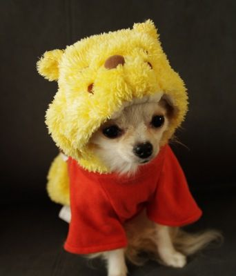 OMG.  Someone I know who has a small dog - please make it wear this.