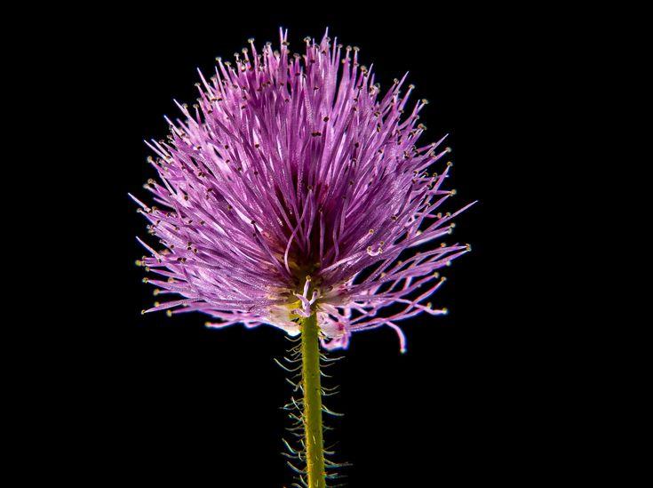 #bloom #blossom #flora #flower #hd wallpaper #macro #nature #purple