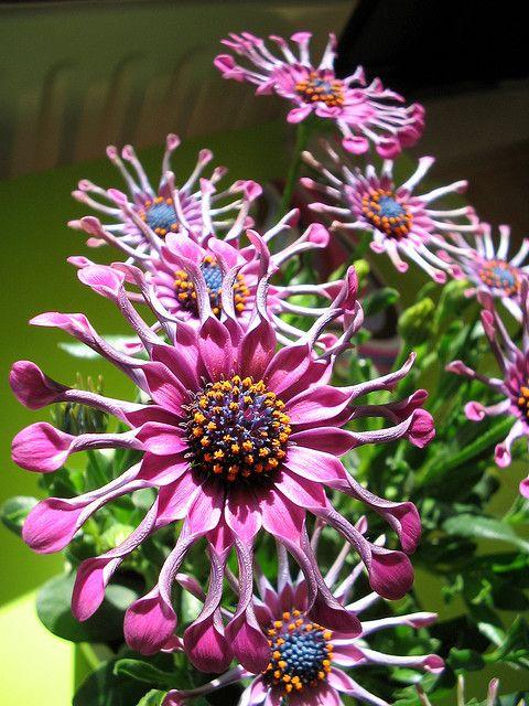 Beautiful, But Weird Flowers