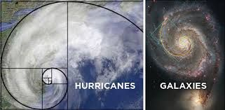 Image result for golden ratio in nature