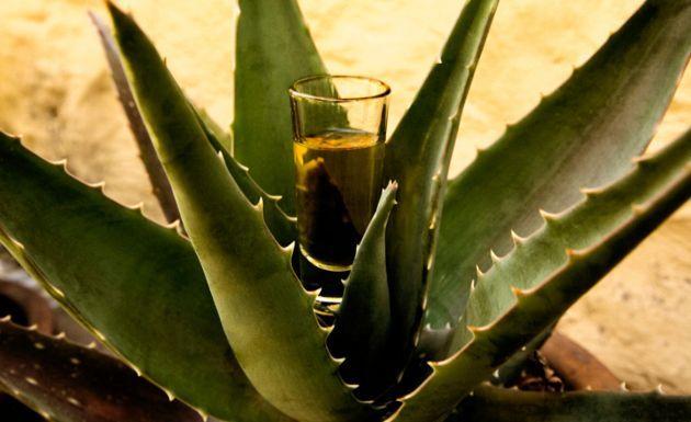 El Volar del Colibrí: Día Nacional del Tequila. La evolución del tequila y el fin de los clichés