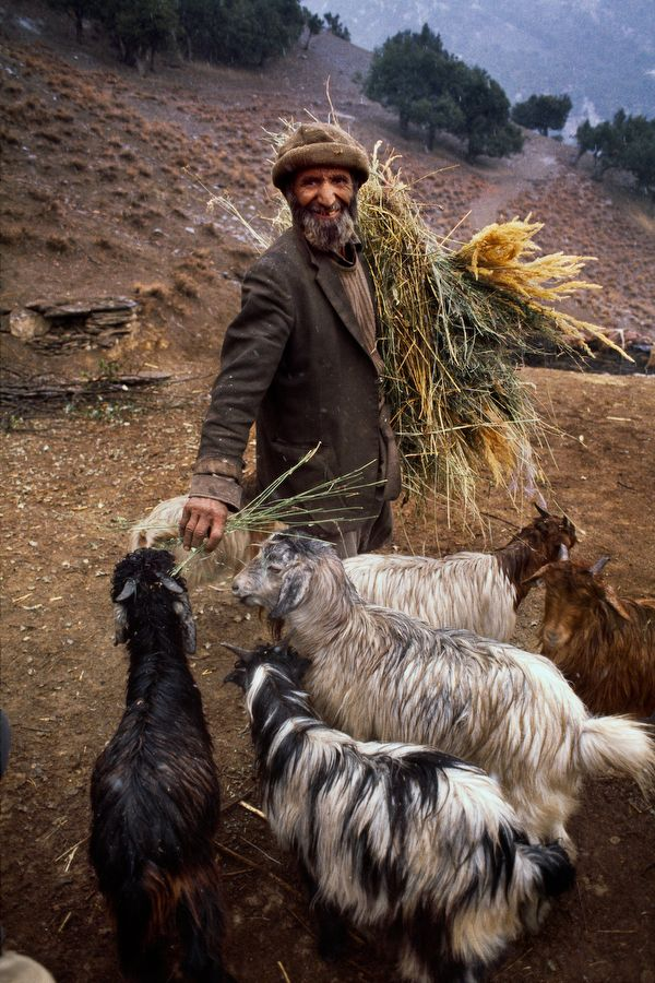 Snack time for goats. Bamiyan Province, Afghanistan Steve McCurry