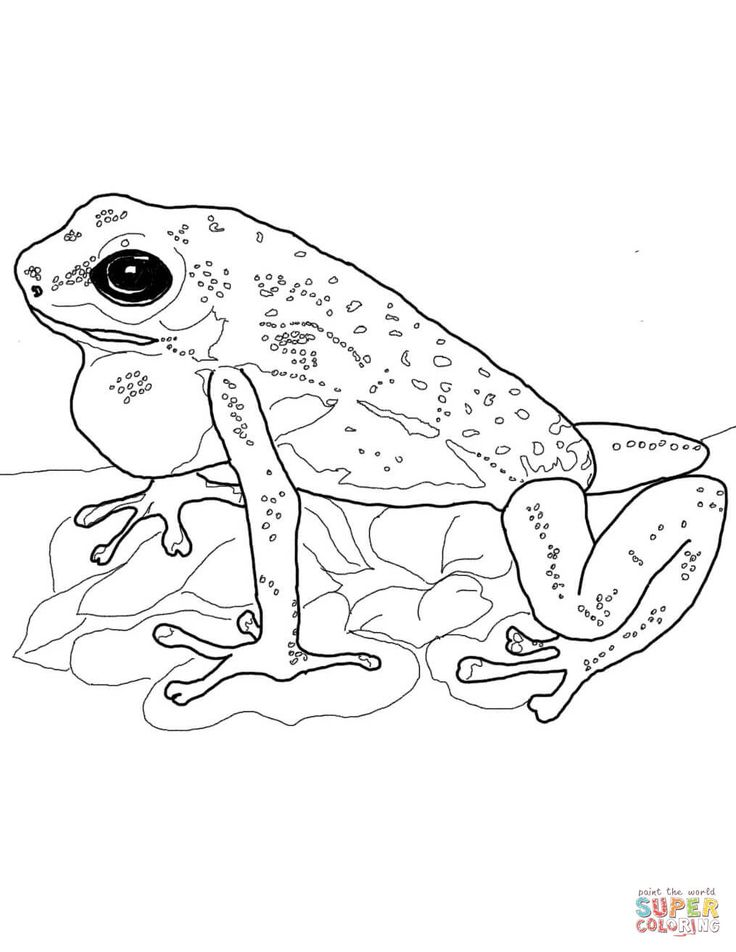 #coloring #dart #frog #pages #poison #2020 Check more at