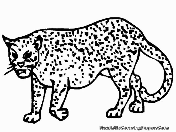 Coloring Pages Cheetah Coloring Pages Winter Coloring Pages